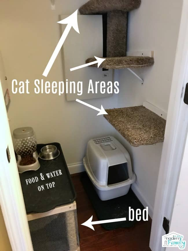 Convert A Closet Into A Cat Room Your Modern Family